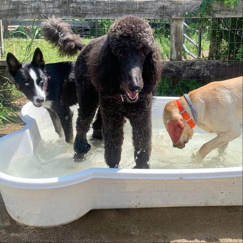 Doggie Day Care - Kennedy K9 Camp