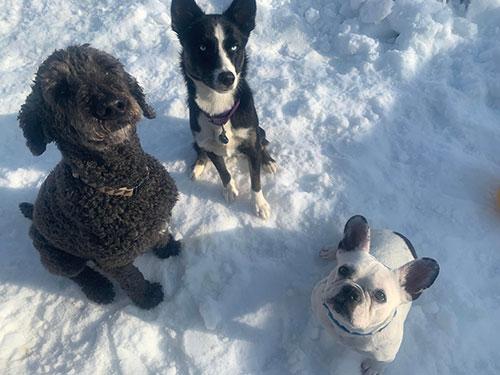 Dog Daycare Plympton